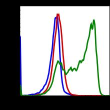 Phospho-S6 Ribosomal Protein (Ser235/236) (Clone: R3A2) rabbit mAb