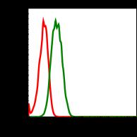 Phospho-S6 Ribosomal Protein (Ser235/236) (Clone: R3A2) rabbit mAb PE conjugate