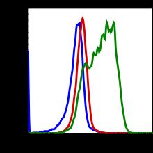 Phospho-S6 Ribosomal Protein (Ser235/236) (Clone: R3A2) rabbit mAb FITC conjugate
