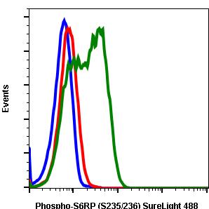 Phospho-S6 Ribosomal Protein (Ser235/236) (Clone: R3A2) rabbit mAb SureLight488 conjugate