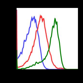 Phospho-ATF2 (Thr71) (Clone: G3) rabbit mAb