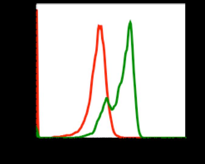 Phospho-PI3 Kinase p85 (Tyr458)/p55 (Tyr199) (Clone: 1A11) rabbit mAb FITC conjugate