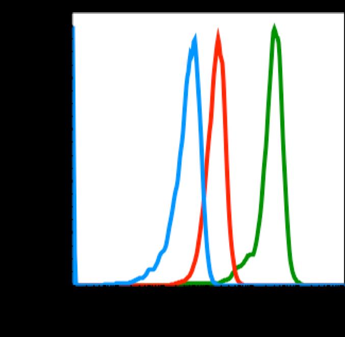 Phospho-Src (Tyr416) (Clone: C4) rabbit mAb