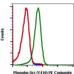 Phospho-Src (Tyr416) rabbit mAb PE conjugate