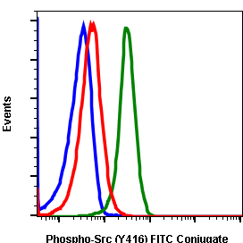 Phospho-Src (Tyr416) (Clone: C4) rabbit mAb FITC conjugate