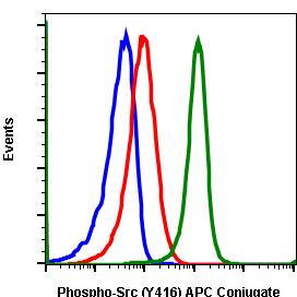 Phospho-Src (Tyr416) (Clone: C4) rabbit mAb APC conjugate