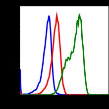 Phospho-EGFR (Tyr1068) (Clone: E5) rabbit mAb