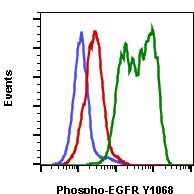 Phospho-EGFR (Tyr1068) (Clone: E5) rabbit mAb PE conjugate
