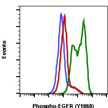 Phospho-EGFR (Tyr1068) (Clone: E5) rabbit mAb APC conjugate