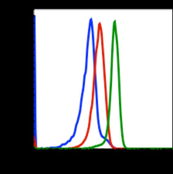 Phospho-CrkL (Tyr207) (Clone: G4) rabbit mAb