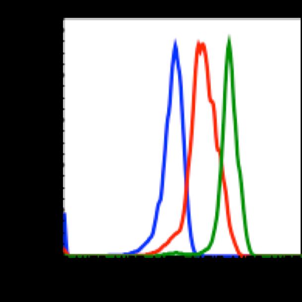 Phospho-CREB (Ser133) (Clone: 4D11) rabbit mAb