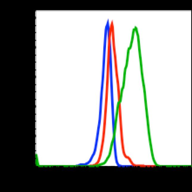 Phospho-Chk1 (Ser317) (Clone: F10) rabbit mAb