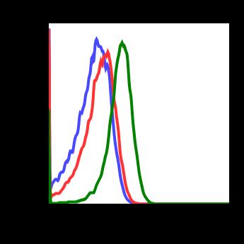 Phospho-MKK7 (Ser271/Thr275) (Clone: R4F9) rabbit mAb
