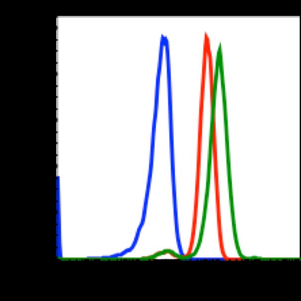 Phospho-MAPKAPK2 (Thr334) (Clone: H2) rabbit mAb