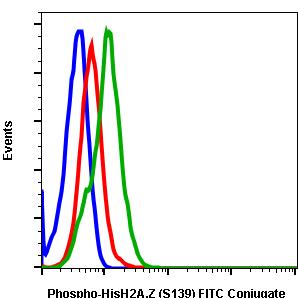 Phospho-Histone H2A.X (Ser139) (Clone: 1B3) rabbit mAb FITC conjugate