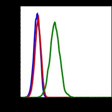 Phospho-PLCg1 (Tyr783) (Clone: C4) rabbit mAb FITC conjugate