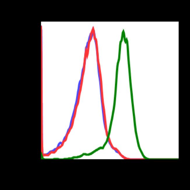 Phospho-Stat1 (Tyr701) (Clone: 3E6) rabbit mAb