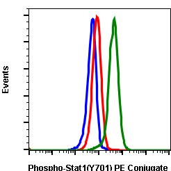 Phospho-Stat1 (Tyr701) (Clone: 3E6) rabbit mAb PE conjugate
