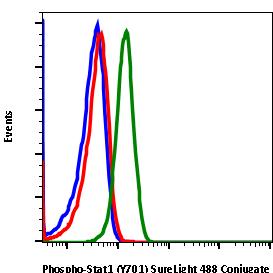 Phospho-Stat1 (Tyr701) (Clone: 3E6)rabbit mAb SureLight488 conjugate