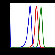 Phospho-MKK3 (Ser189)/MKK6 (Ser207) (Clone: D3) rabbit mAb