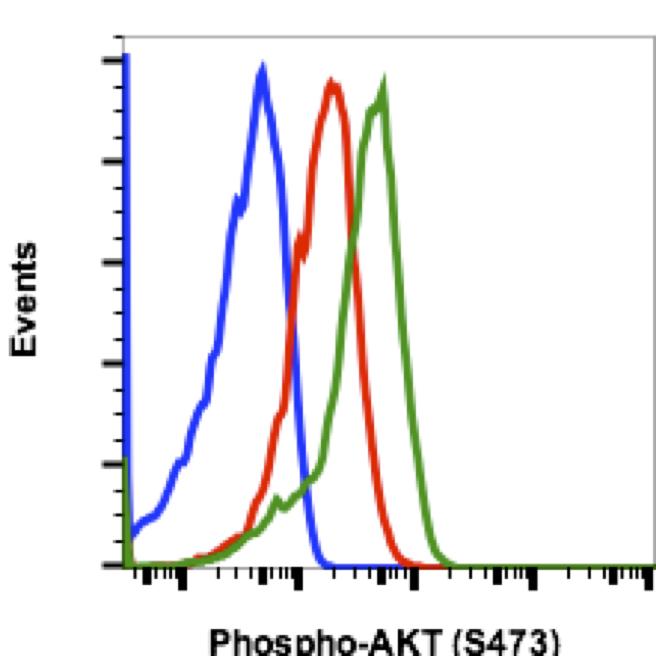 Phospho-Akt1 (Ser473) (Clone: B9) rabbit mAb