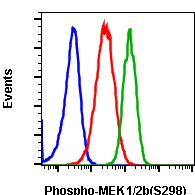 Phospho-MEK1 (Ser298) (Clone: H8) rabbit mAb