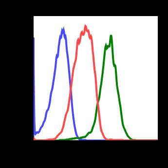 Phospho-Stat1 (Ser727) (Clone: C6) rabbit mAb