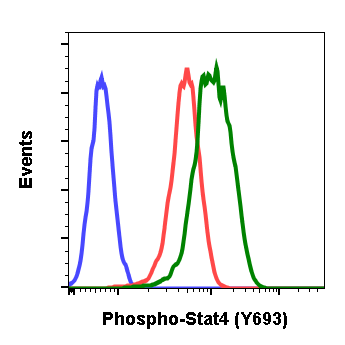 Phospho-Stat4 (Tyr693) (Clone: F6) rabbit mAb