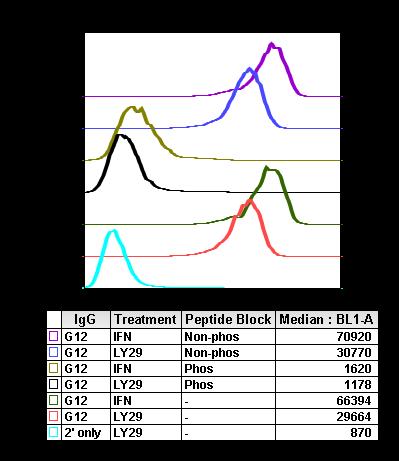 Phospho-Akt1 (Thr308) (Clone: G12) rabbit mAb
