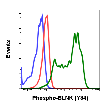 Phospho-BLNK (Tyr84) (Clone: H4) rabbit mAb