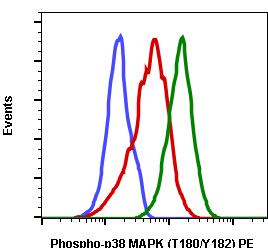 Phospho-p38 MAPK (Thr180/Tyr182) (Clone: E3) rabbit mAb PE conjugate