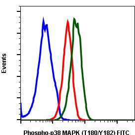 Phospho-p38 MAPK (Thr180/Tyr182) (Clone: E3) rabbit mAb FITC conjugate