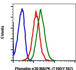 Phospho-p38 MAPK (Thr180/Tyr182) (Clone: E3) rabbit mAb SureLight488 Conjugate