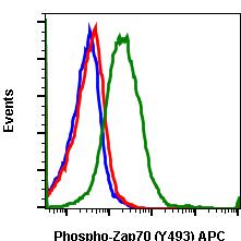 Phospho-Zap70 (Tyr493)/Syk (Tyr526) (Clone: H11) rabbit mAb APC conjugate