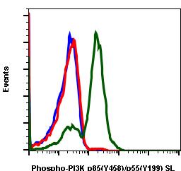 Phospho-PI3 Kinase p85 (Tyr458)/p55 (Tyr199) (Clone: 1A11) rabbit mAb SureLight488 conjugate