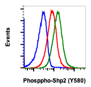 Phospho-Shp2 (Tyr580) (Clone: 4A2) rabbit mAb APC conjugate
