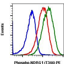 Phospho-NDRG1 (Thr346) (Clone: F5) rabbit mAb PE conjugate