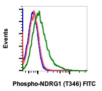 Phospho-NDRG1 (Thr346) (Clone: F5) rabbit mAb FITC conjugate
