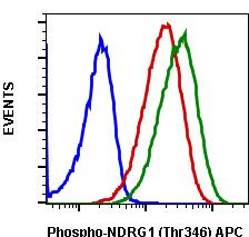 Phospho-NDRG1 (Thr346) (Clone: F5) rabbit mAb APC conjugate