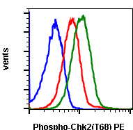Phospho-Chk2 (Thr68) (Clone: D12) rabbit mAb PE conjugate