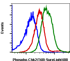 Phospho-Chk2 (Thr68) (Clone: D12) rabbit mAb SureLight488 conjugate