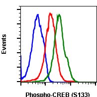 Phospho-CREB (Ser133) (Clone: 4D11) rabbit mAb PE conjugate