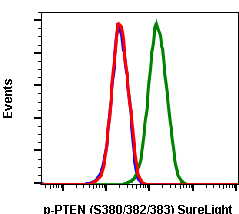 Phospho-PTEN (Ser380/Thr382/383) (Clone: E4) rabbit mAb SureLight488 conjugate