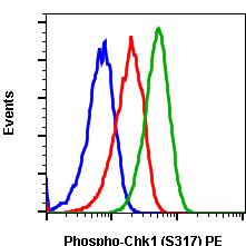 Phospho-Chk1 (Ser317) (Clone: F10) rabbit mAb PE conjugate