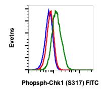 Phospho-Chk1 (Ser317) (Clone: F10) rabbit mAb FITC conjugate
