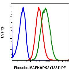 Phospho-MAPKAPK2 (Thr334) (Clone: H2) rabbit mAb PE conjugate