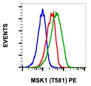 Phospho-MSK1 (Thr581) (Clone: A5) rabbit mAb PE conjugate