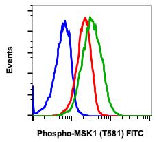 Phospho-MSK1 (Thr581) (Clone: A5) rabbit mAb FITC conjugate