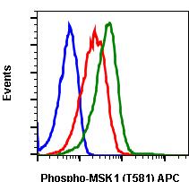 Phospho-MSK1 (Thr581) (Clone: A5) rabbit mAb APC conjugate