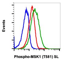 Phospho-MSK1 (Thr581) (Clone: A5) rabbit mAb SureLight488 conjugate